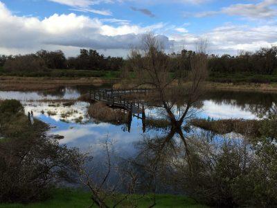 Yolo RCD - Wetlands